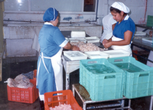Seafood processing - Mexico