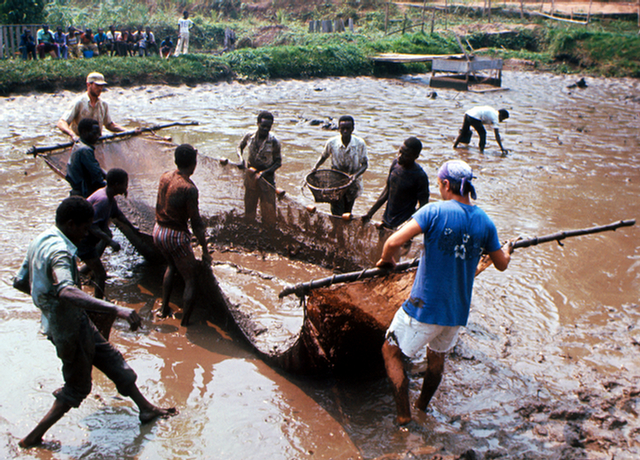 Pond fishery - Dem Rep of Congo (Zaire)